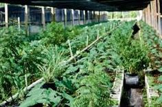 Image result for Indian herb garden