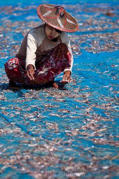 A local woman in Ngapali Beach lays down fish caught that day, to dry in the sunlight.  Dried fish are a speciality in Myanmar.