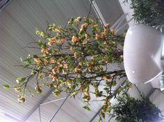 Prachtige magnoliabloemen op echt hout, een geweldige combinatie! Plants, Plant, Planets