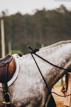 The Preppy Equestrian
