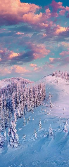 winter, trees, clouds, exploring beauty