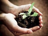 Haggle for Seeds Keeping weeds off Recycle and Compost to use as Fertilizers Reduce and Reproduce   These are the few things on how you can save money for your gardening!