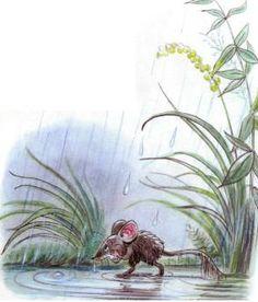 Сказка: Под грибом (иллюстрации: Сутеев В.) Beatrix Potter, Children's Book Illustration, Rainy Days, Cute Art, Childrens Books, Fairy Tales, Illustrator, Lisbeth Zwerger, Stuffed Mushrooms