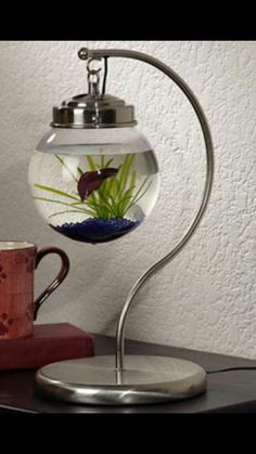Feel so bad for Fighting Fish - terrarium? Hanging fish tank - could easily be made with a banana hanger and a ceiling light set from a home improvement store; would be fun as a snow globe or terrarium, too. Feng Shui, Aquarium Original, Home Design, Interior Design, Modern Interior, Think Tank, Glass Fish Tanks, How To Make Terrariums, Ideias Diy