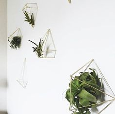 Spring Wall Decor With Umbra Prisma Decor And Airplants Styling And  Photographyu2026