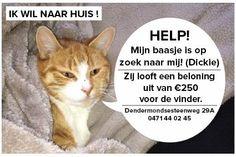 #aalst Lieve kattenvrienden, ons katje van 2 jaar oud  #vermist. Gelieve te delen om onze hartendief terug te brengen. Dankje (sinds maandag 27jan vermist) https://www.facebook.com/olivier.roels.3  Olivier Roels