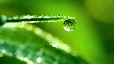 Green Dew Drop