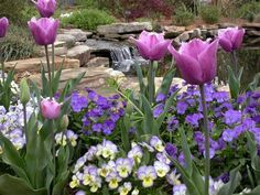 The garden includes a Fern Glade, Herb Garden with 14 theme gardens, Dogwood Trail and Daylily Garden with nearly 700 cultivars. Daylily Garden, Wonderful Flowers, Garden Theme, Day Lilies, Garden Planning, Herb Garden, Purple Flowers, Botanical Gardens, Make Me Smile