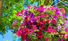 How to fit & fill a hanging basket