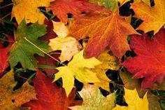 Mükemmel sonbahar fotoğrafları Fotoğrafları