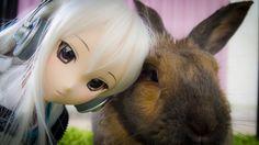 Dollfie Dream Yumi meets cute rabbit Piko! ^O^