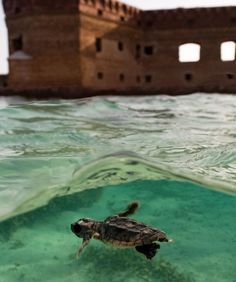 Loggerhead Key Snorkeling | Dry Tortugas Activities: Key West Seaplane Charters Fort Jefferson ...