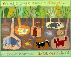 Bulletin Board Idea: Animals That Can Be Found Underground (Habitats)