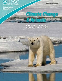 Learn how climate change is affecting animals worldwide with these free lesson plans from the International Fund for Animal Welfare