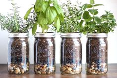 This herb garden in mason jars is a stylish alternative for people without yards, and it takes up very little room in your kitchen. Mason Jar Plants, Mason Jar Herb Garden, Plants In Jars, Pot Mason, Diy Herb Garden, Mason Jar Diy, Hydroponic Herb Garden, Indoor Gardening, Container Gardening