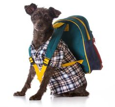 Backpacking with Dogs: Essential Tips And Tricks | Top Dog Tips
