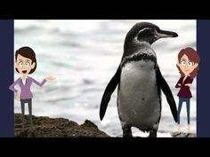 ▶ Interesting Music Video Book For Kids About Penguins - YouTube
