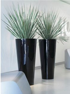 Looking for the best Indoor plants in Melbourne? Inscape Indoor Plant Hire is leading indoor and office plants hire company in Melbourne offering a stylish interior plant design. We offer the best Indoor plants in Melbourne as per your choice. Contact us on 1300368548 to hire the best indoor and office plants at a very affordable cost or visit our website.