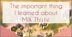 """For a while now, I have avoided milk thistle products. Unfortunately I got my source of information about milk thistle from """"not so trustworthy"""" sites and believed it when they said I should avoid milk thistle as it had estrogenic qualities. Now, for anyone who has Endometriosis, we definitely want to avoid anything that has …"""