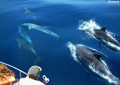 Watch Sperm whales, Orcas, Fin whales, Pilot whales and dolphins in Spain! Respectful whale watching in the Strait of Gibraltar with firmm. Oh The Places You'll Go, Places To Travel, Places To Visit, Tenerife, Surf, European Tour, Cadiz, Whale Watching, Andalusia