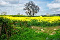 England's Green and Pleasant Land - 1 by Steve Hey on 500px