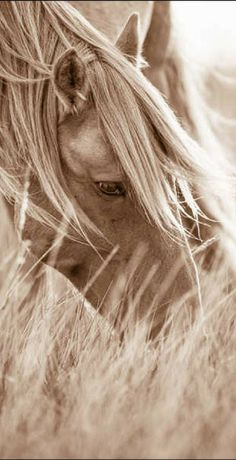 What a lovely, beautiful horse! I love the way Lisa Cueman has captured these untamed beautiful wild horses in her photographs Beautiful Horse Pictures, Most Beautiful Horses, All The Pretty Horses, Animals Beautiful, Horse Wallpaper, Majestic Horse, Horse Drawings, Horse Photos, White Horses