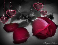 View 34 Best red hearts and roses gif images Beautiful Red Roses, Beautiful Gif, Amazing Flowers, Roses Gif, Animated Heart, Animated Gif, Heart Gif, Sad Heart, Hearts And Roses
