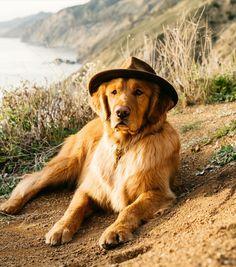 Brain Training For Dogs - Adrienne Farricelli's Online Dog Trainer Dogs Golden Retriever, Golden Retrievers, Labrador Retriever, Baby Puppies, Dogs And Puppies, Doggies, Short Dog, Tallest Dog, Golden Dog