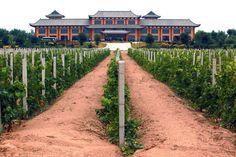 Les Chinois, futurs rois du vin ?