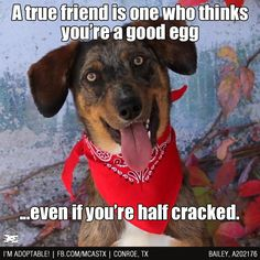 Personally, I tend to prefer my friends to be AT LEAST half cracked, maybe even fully cracked. ;) ADOPTED!!!