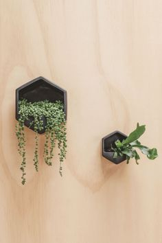 George+Co - Hexagon Wall Planter Black | Flo and Frankie