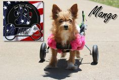 This story is the third installment in my mission to find affordable resources for dog wheelchairs (dog carts).
