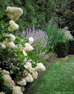 Limelight hydrangeas to the right of the garden pavilion burst into bloom. Next to the hydrangeas is Blue Fortune agastache with its lavende...