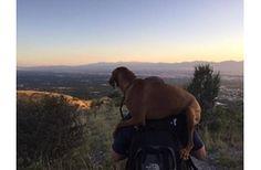 Vizsla-mentés a hegyről. Egy hihetetlen állatmentés története Amerikából. #kutya  #dog   #hírek   #vizsla   #állatmentés #animalrescue  #kutyabaráthelyek