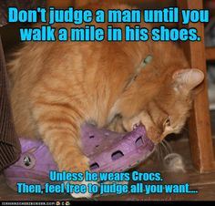 Here comes the Judge http://cheezburger.com/9036671232/dont-judge-a-man-wearing-crocs-by-his-shoes-cat-meme