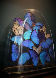 Butterflies Under 19th Century Dome Taxidermy Antique Vintage Decorative Curio   eBay