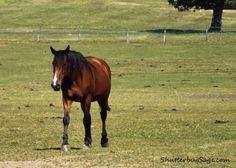 A horse at Versailles  Un cheval a Versailles  Versailles, Paris, France