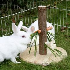 What a cute rabbit treat toy!!