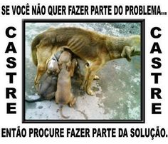 Todos os dias a APATA (Associação de proteção dos animais e do meio ambiente de Altamira) recebe dezenas de ligações com pedidos de socorro para cães e gatos abandonados, doentes ou atropelados. Geralmente, são de pessoas que não podem arcar com despesas financeiras em clinicas veterinárias. Além disso,...
