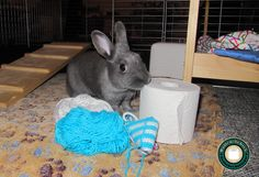 © rollen-schick.de Kaninchen knabbert an Klorolle #Kanninchen #Klorolle #Toilettenpapier #Hase #Spielzeug