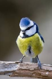 Bilderesultat for norske fugler oversikt