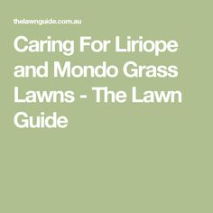 Caring For Liriope and Mondo Grass Lawns - The Lawn Guide