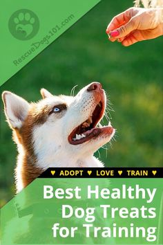 High Value Dog Treats Training. How to find Your Dogs' High-Value Treat #dogtreats #dogs #dogagility #dogtraining #rescuedogs101 Dog Training Techniques, Dog Training Tips, Potty Training, Training Pads, Dog Minding, Easiest Dogs To Train, Dog Agility, Healthy Dog Treats, Disney Films