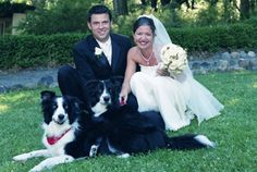 Border Collie ring bearers!!! I will so do this with my two if i ever get married