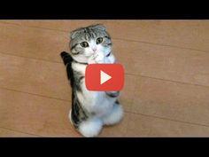 kutyák és macskák - Google keresés