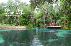 Juniper Springs Recreation Area Juniper Springs is a subtropical paradise located in the middle of the Ocala National Forest. The water temperature of the crystal clear water is 72 degrees y…