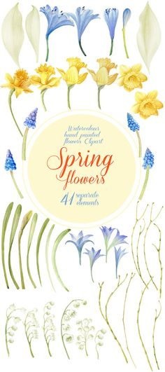Floral Watercolor Clipart Spring Flowers by WatercolorSeasons