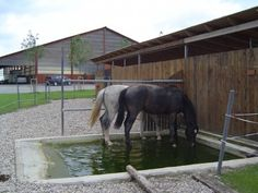 Useful for healthy hooves  Equestrian Architecture and Design