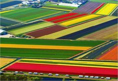 HOLLAND TULIPS....awesome colors