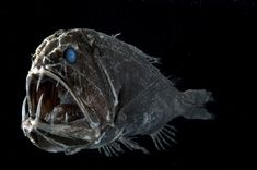 Into The Deep: an underwater photography exhibition in Edinburgh presented by   Steve Bloom Images.